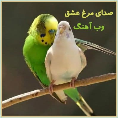 دانلود صدای مرغ عشق